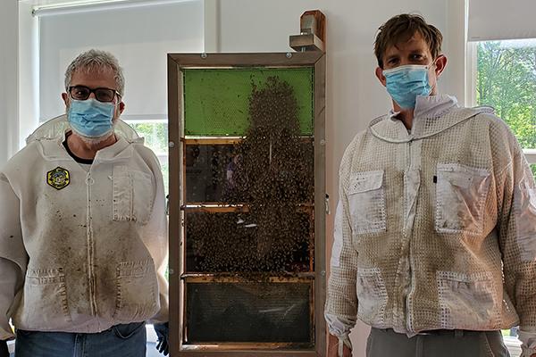 Bee Hive at TCS!